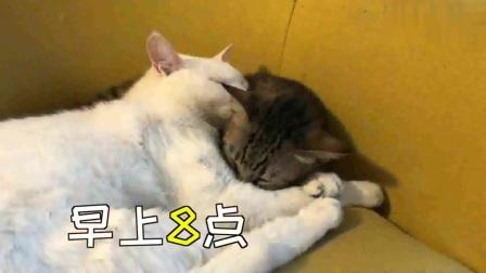萌宠:猫咪白天睡大觉,晚上夜生活多姿多彩