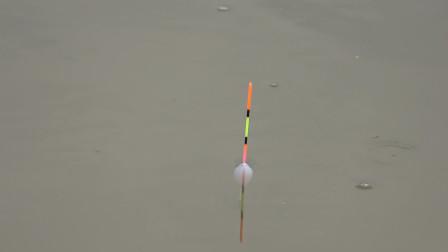 钓鱼:大大小小的白条混在一起,吃口虽凶,但也不好打!