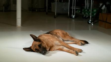 狗狗的加速度有多快?主人用高速摄像机记录,网友:长见识了!