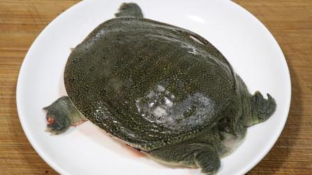 教你红烧甲鱼的家常做法,肉质鲜嫩不腥,在家也能做出饭店的味道