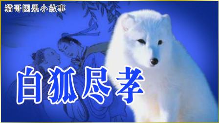 尽孝的白狐
