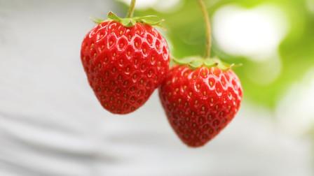 实行草莓绿色防控,他有妙招教给你!