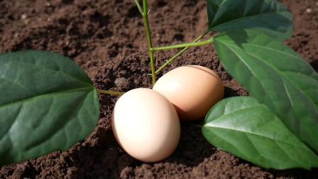 把鸡蛋壳埋进土里能种出什么?天天浇水施肥,一月后太神奇!