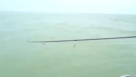 驾船出海钓鱼,这是撞到大鱼群了,竿子都带了太软了