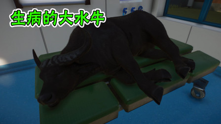 动物园建设18:非洲大水牛刚运来就生病了,幸好我们有专业的兽医!