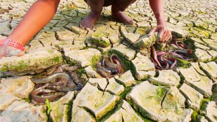 干裂的旱地里,农村男子掰开一块泥土,下面全是鱼