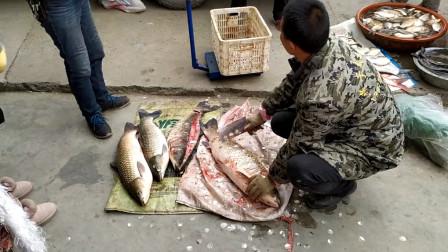 猪肉价格飞涨,幸好湖北鱼多,十多斤的大草鱼,只卖8元一斤!