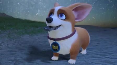 飛狗MOCOMOCO是條傻狗主人也是個傻主人