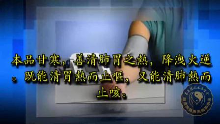 『中医中药学与认识草药』利尿 清热 降血糖 白茅根小草治大病
