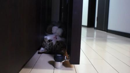 铲屎官给猫咪设计透明的缝隙,来全方位观测这只液化的猫
