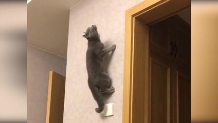 """猫咪上演""""飞檐走壁"""" 主人当场惊呆"""