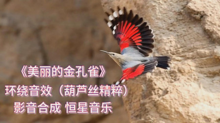 环绕音效葫芦丝演奏《美丽的金孔雀》