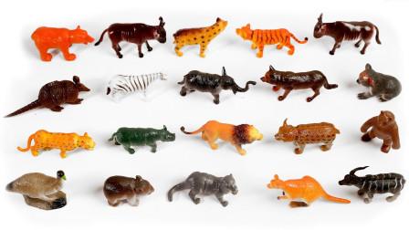 学习认识农场里的动物们