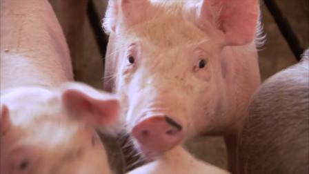 河南千亿首富:靠卖猪起家,身价超越王健林!