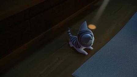 甜甜私房猫:抓灯光的游戏,小猫咪很喜欢玩哦