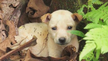 叔叔在草丛里捡到一只小流浪狗,把它带回家,好温馨哦