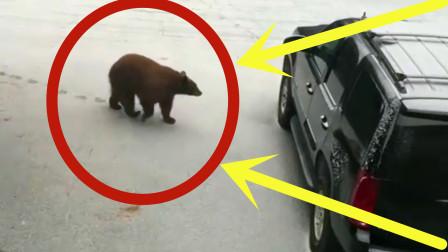 越野小伙刚下车,一黑熊突然冲出,监控之下惊心动魄!