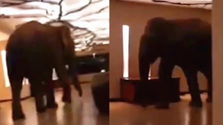 """斯拉兰卡一酒店遭大象""""闯入""""实拍:大象楼道内缓慢行动似散步"""