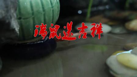红红火火又一年 祝新年吉祥