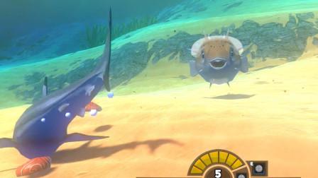 海底大猎杀:小河豚太厉害了 大白鲨都打不赢它
