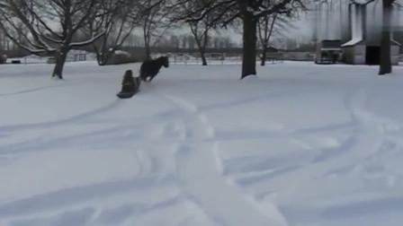 让马拉着雪橇奔跑,真好玩