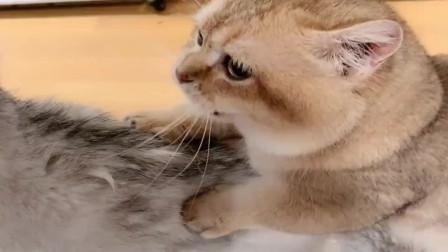 主人要把小猫咪送人,看妈妈的表情,主人真的心软了!