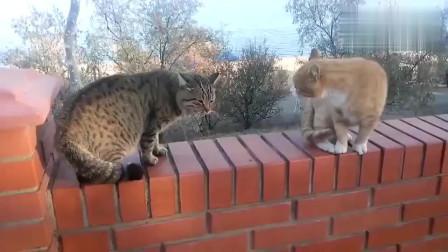 两只猫咪之间的对话,真的很难懂,谁来翻译一下?