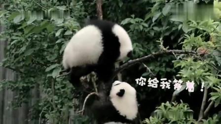 熊猫:臭小子,你欺负我!你给我等着