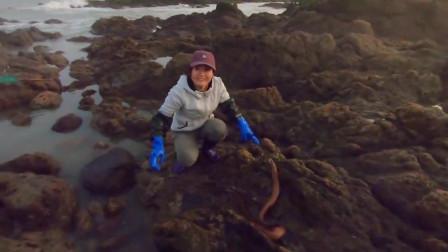 崎岖的礁石上发现两米长大货,美女大胆追赶,这海货太凶猛