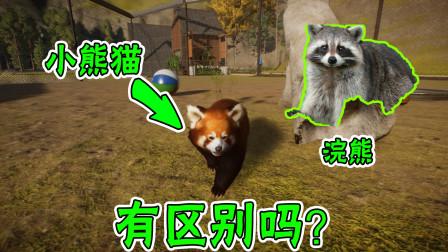 动物园建设20:小熊猫跟浣熊长的好像哦!有什么区别呢?