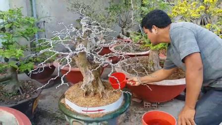 这棵树桩绑满了铝线,这是干嘛用的?原来这是制作造型的好方法