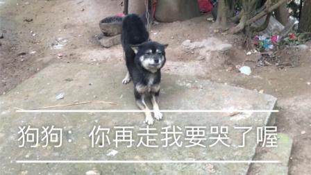 狗:也许我不是人,但是你是真的狗