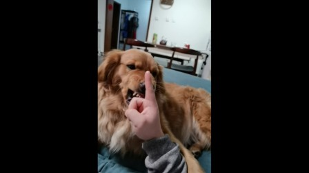 主人外出6天到家后……狗子恨的牙痒痒!