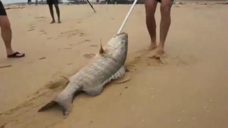 在这钓鱼,农村小哥抄网都用不到,大鱼被浪就涌到岸上了