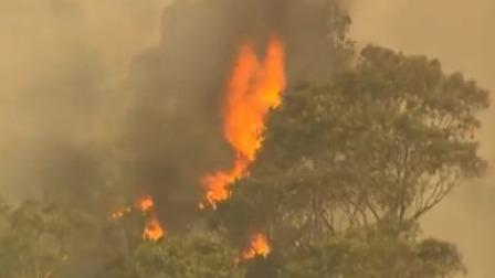 澳洲全国性大火连烧4个月总理却在度假,舆论怒了