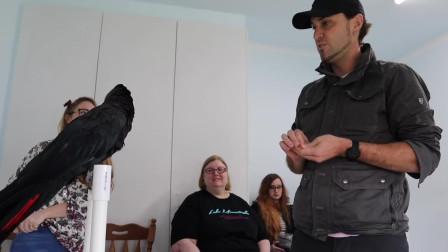 黑凤头鹦鹉护理和培训红尾黑鹦鹉