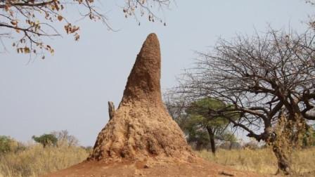 中国人帮非洲修路选择推翻蚂蚁山非洲人赞扬施工速度