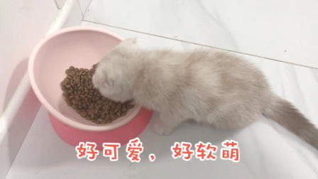 两只可爱的猫咪吃饭饭,真是萌化啦!网友:吃得好香阿!