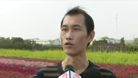 珠江新闻眼 2020 广州七彩花田成乡村振兴示范片