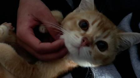 【小猪】猪儿虫日记丨这只猫可爱已经溢出屏幕了!