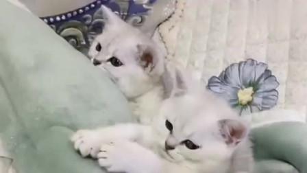 小猫咪被老姨给咬了,瞧把猫咪团子给气得,好心疼的