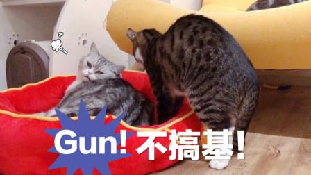 小猫想跟大猫睡惨遭嫌弃:走开,我可是纯爷们!
