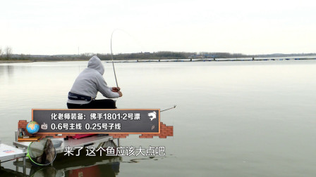 都说老化遛鱼厉害,今天算是见识了,0.25的子线这样折腾都没断
