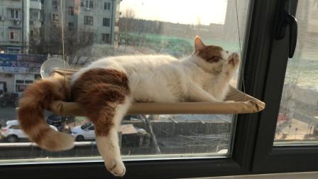 温暖的冬日午后,猫咪晒太阳的样子太可爱了,好想抱起来撸!