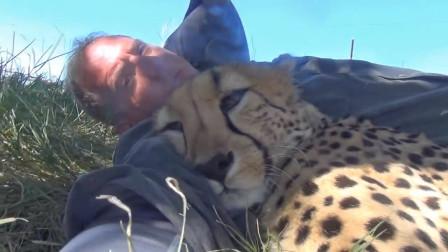 饲养员正躺在地上睡觉一只猎豹走了过来猎豹让俺睡会儿