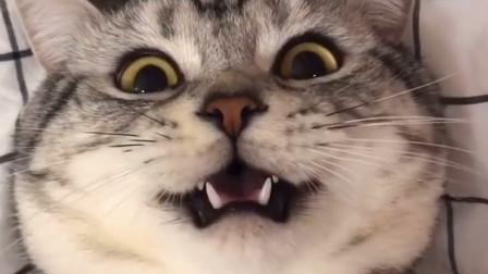 可爱猫咪成精,学人说话萌翻众人,网友:送去上学!