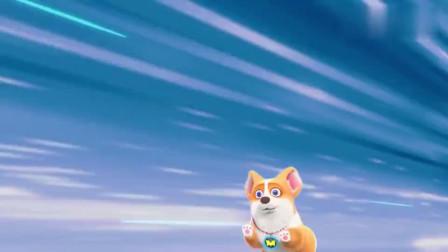 短腿小柯基:这么贴心的狗子你们谁想要,神奇小柯基倒贴一袋高级狗粮送给你们