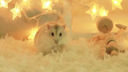 萌宠吵着要过元宵节,但是不能出门,主人费尽心思满足了仓鼠的心愿