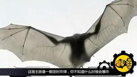 蝙蝠已经在尽力长得丑了,为什么还要吃它?你们知道它有多毒吗!