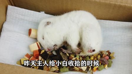 宠物仓鼠小白死了,小主人非常伤心,挖个洞亲手把它埋在土里